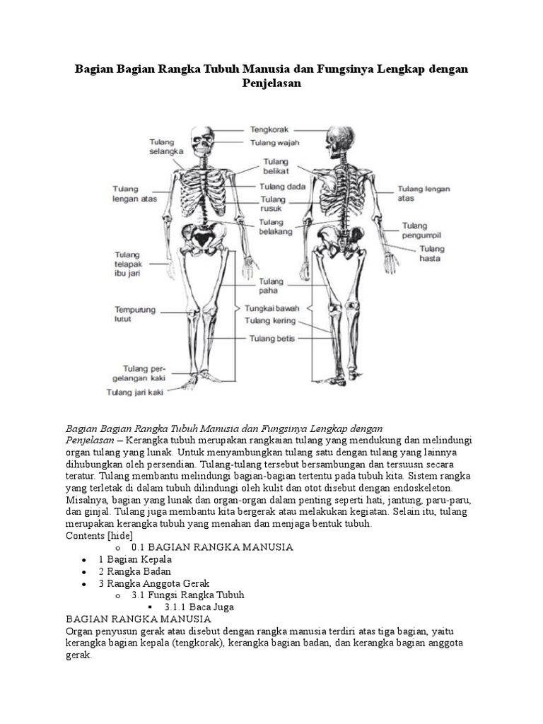 Bagian Bagian Rangka Tubuh Manusia Dan Fungsinya Lengkap Dengan Penjelasan