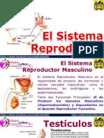 El Sistema Reproductor