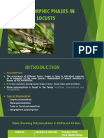 Polymorphic Phases in Locusts Antomonology final year
