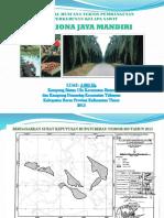 contoh presentasi studi kelayakan kebun sawit