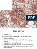 bazo_y_timo