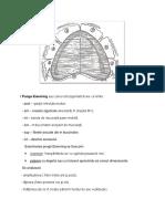 Zone functionale periferice.docx