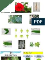 tumbuhan segalanya