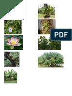 plants-ysa.docx