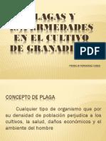 Diapositivas Granadilla