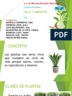 diapositivas plantas EDITAR