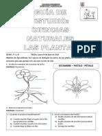 Guía de Estudio Las Plantas 1