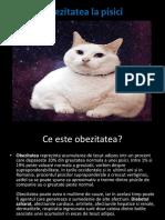 Obezitate La Pisici