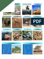 Especies Bosque de Pomac
