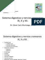 13 CC 2014 Sistema Digestivo y Nervios Craneanos IX X y XII