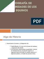 ecografia equinos IMAGENOLOGIA.pptx
