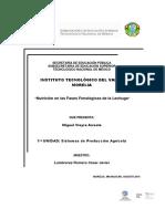 Nutricion en Las Fases Fenologicas de La Lechuga
