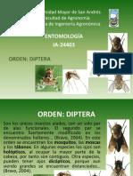 Diptera.pptx