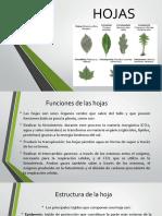 Plantas Biotecnologia Vegetal
