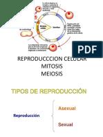 Reproduccion Celular Mitosis y Meiosis