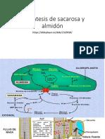 Biosíntesis de Sacarosa y Almidón