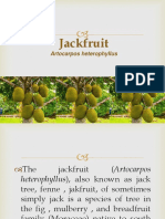 Jackfruit Report