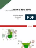 taller Anatomía de la Pelvis.pptx