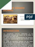 RAZAS DE GANADO LECHERO.pptx