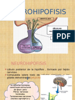 Neurohipofisis Point