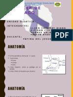 Cáncer de Estómago Diapositiva