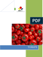 005 - D.T - Proyecto Competitividad Tomate.docx