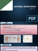 Cap. 14 - Sistema Endocrino