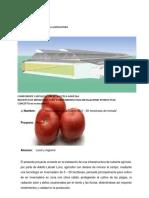 FICHA TECNICA PROGRAMA DE FOMENTO A LA AGRICULTUR TOMATE.docx