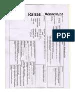 Niveles en Natacion.pdf