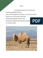Pequeños y Camellos