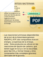 Fotosíntesis Bacteriana PDF