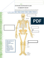 aic - el esqueleto humano.pdf