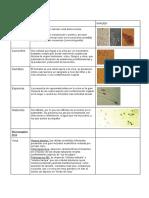 Atlas de sedimeto urinario