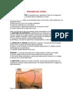 Regiones Del Dorso Anatomia