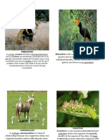 Booklet ECOSYSTEM RELATIONSHIP With Definition