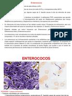 enterobacterias meningococo
