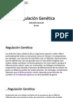 13. Regulación Génica y Apoptosis