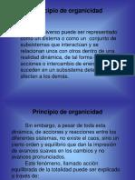 Principio de Organicidad - TGS