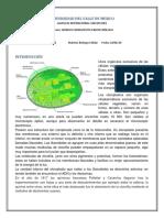 Obtención de clorofila por centrifugación