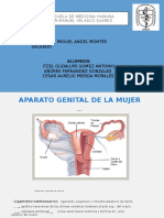 anatomia de ovario