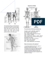 Organ System of Human Body