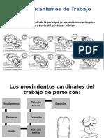 mecanismos-del-trabajo-de-parto 3.pptx