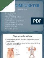 ANATOMI URETER-1.pptx