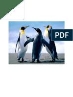 API 650 DCPee Design 1