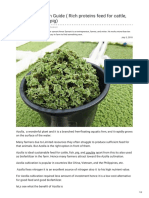 Azolla Cultivation Guide Rich Proteins Feed for Cattle Poultry Fish and Pig - Agricultureguruji.com