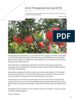 Agricultureguruji.com-The Ultimate Guide for Pomegranate Farming 2018