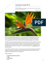 Agricultureguruji.com-Bird of Paradise Cultivation Guide 2018