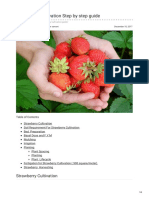 Agricultureguruji.com-Strawberry Cultivation Step by Step Guide