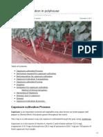 Agricultureguruji.com-capsicum Cultivation in Polyhouse