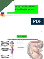 Lect.06-Brain + Cranial N